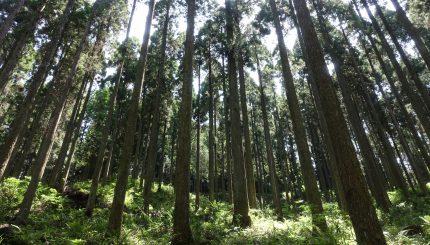Minamioguni Rural Forestry Tour